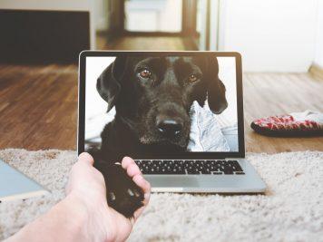 Pet Tech Gifts