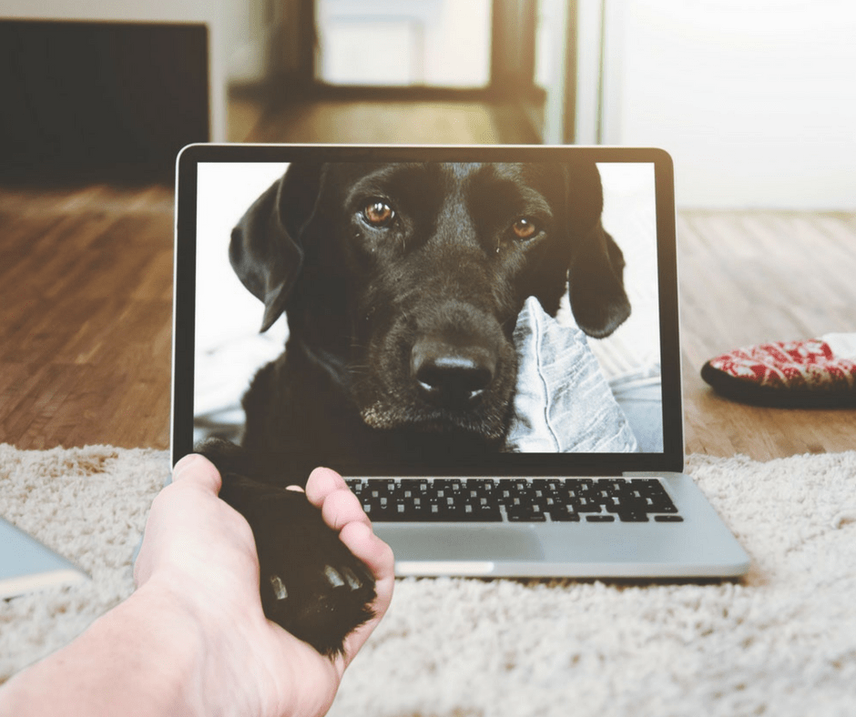 Gift Guide 5 Pet Tech Gifts You Need For Your Dog