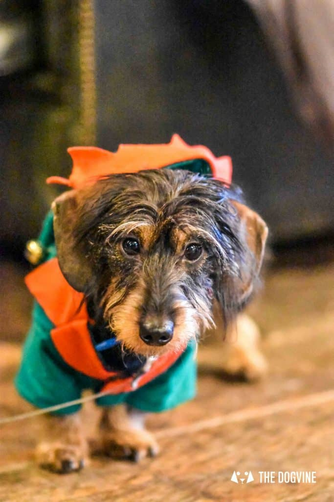 Canine Christmas Crackers at The Windmill Clapham 13