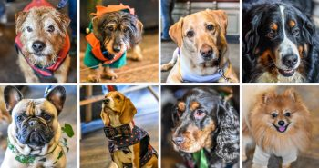 Christmas Canine Crackers at The Windmill Clapham