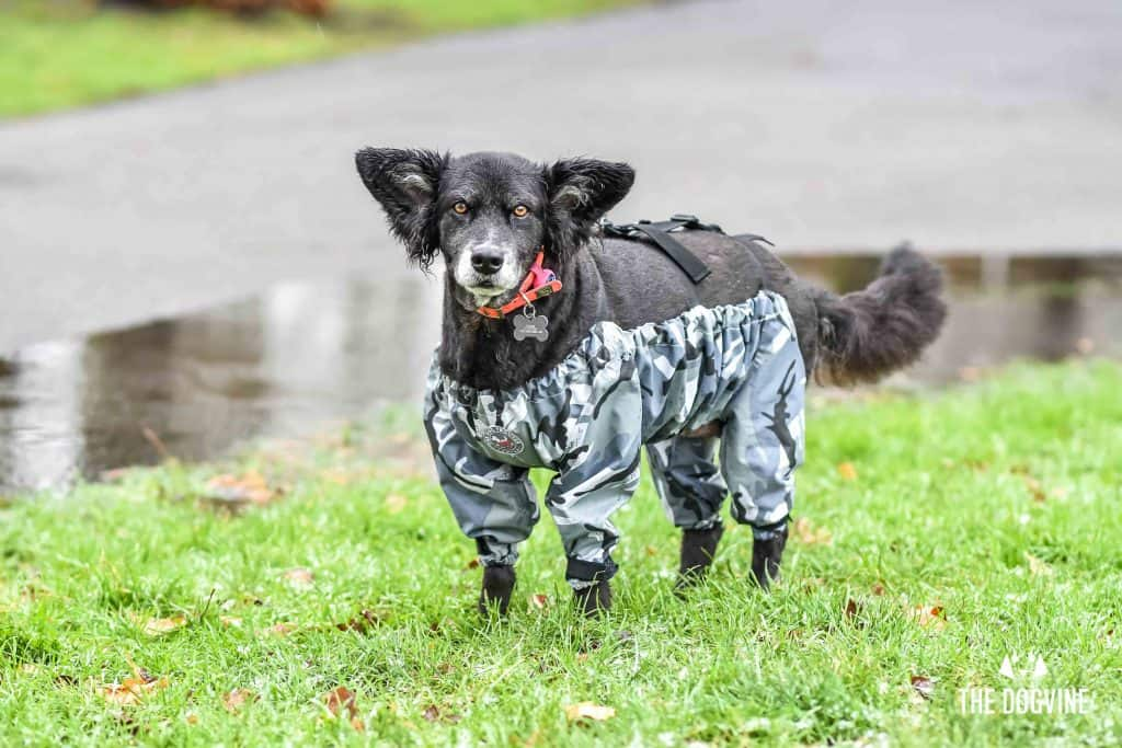The Dogvine - Dog Trousers Review 15