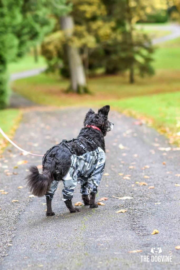 The Dogvine - Dog Trousers Review 5