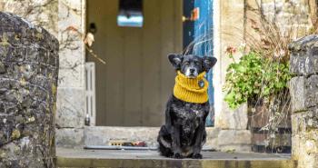 The Dogvine - The Bath Arms FI