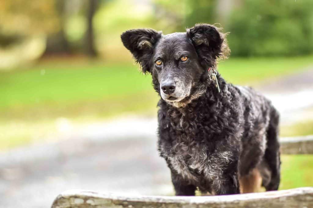 Dog-Friendly London Parks Every Dog Owner Should Visit 4