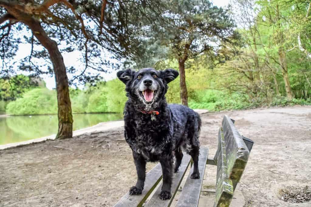 Dog-Friendly London Parks Every Dog Owner Should Visit 5