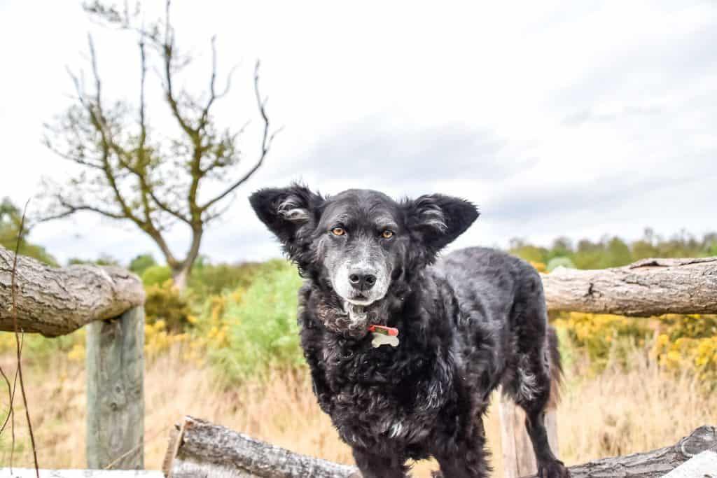 Dog-Friendly London Parks Every Dog Owner Should Visit 6