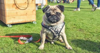 FI - 17 Things To Do In London With A Dog _ London Dog Events 2018