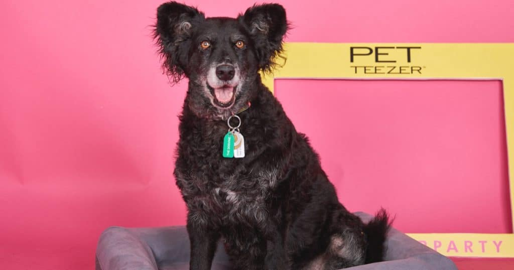 FI - Introducing The Pet Teezer, The New Tangle Teezer For Dogs