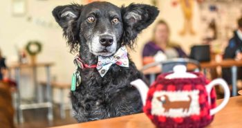 FI - Refuel With Your Pooch At The Dog-Friendly Cafe Paws for Coffee Sheen
