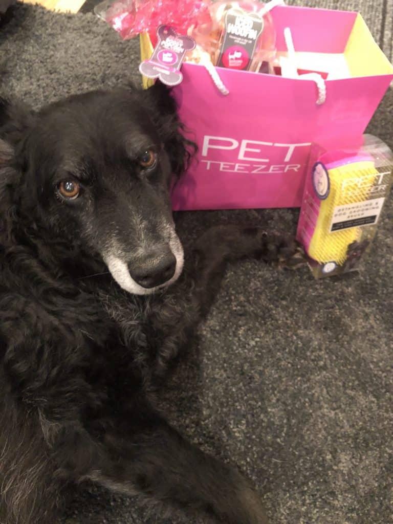 Introducing The Pet Teezer, The New Tangle Teezer For Dogs 11