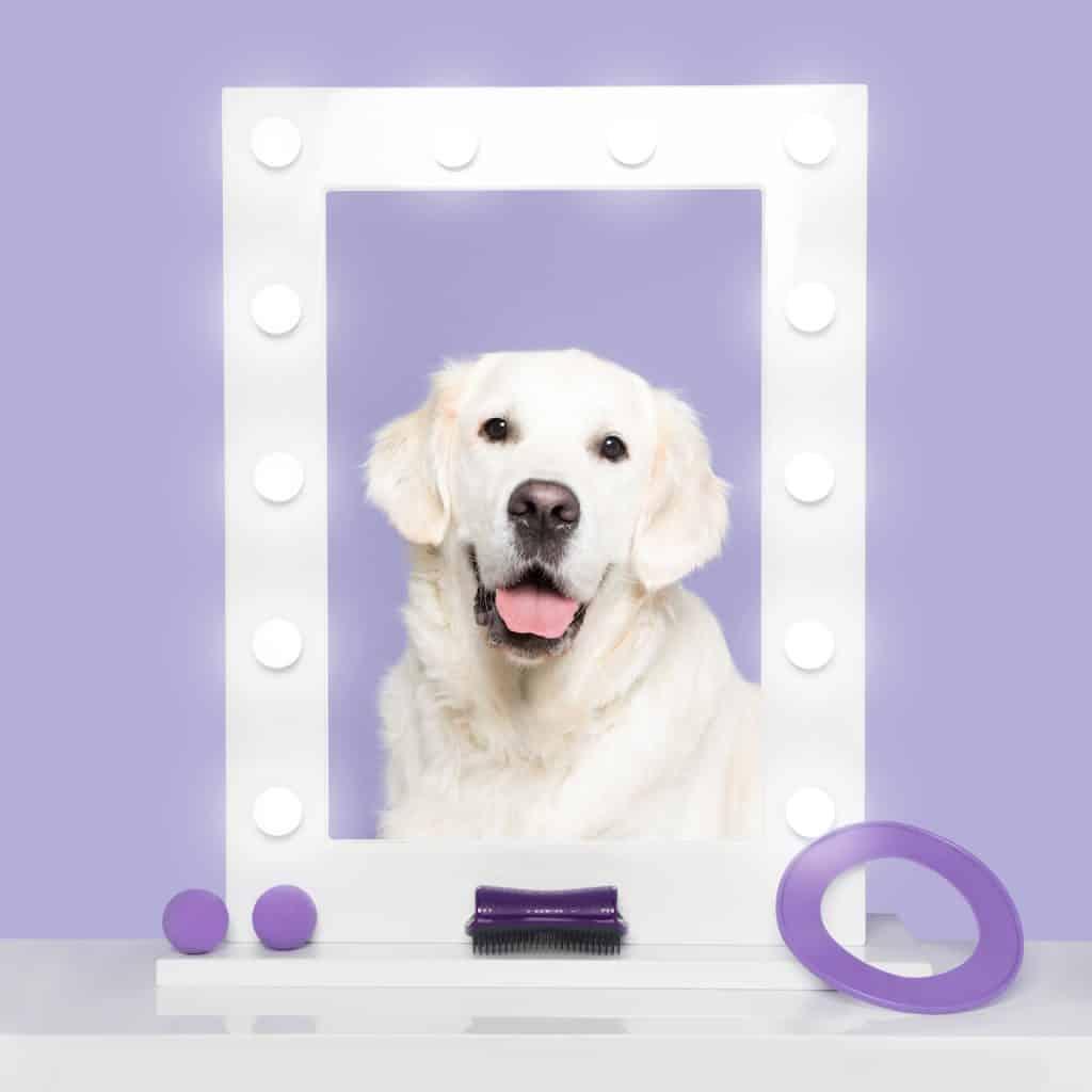 Introducing The Pet Teezer, The New Tangle Teezer For Dogs 7