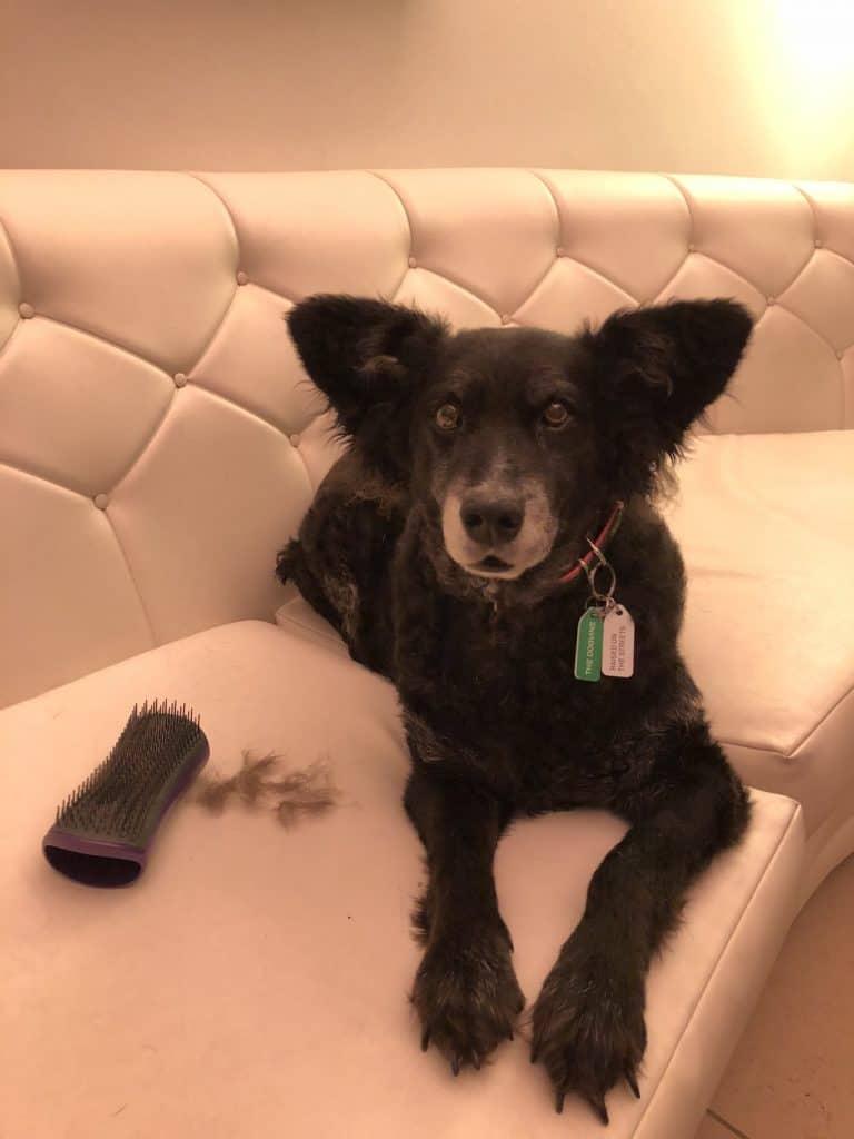 Introducing The Pet Teezer, The New Tangle Teezer For Dogs 9