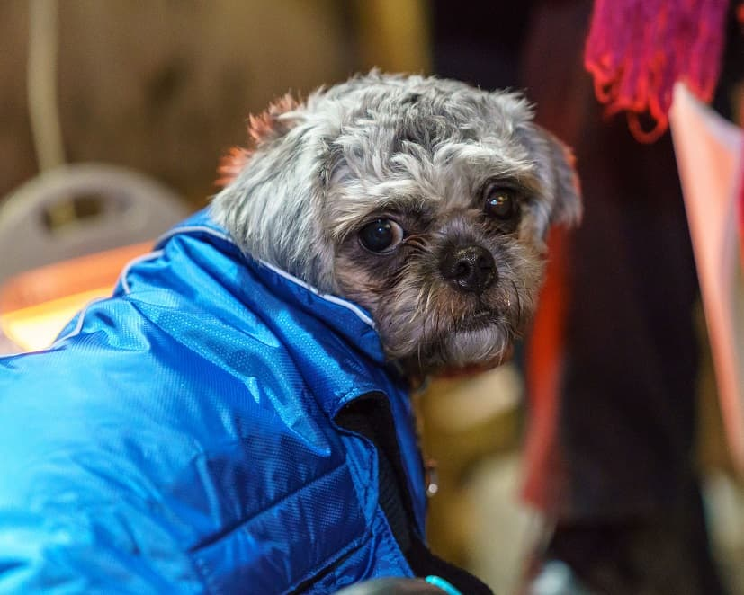 Mayhew Helps Dogs Of The Homeless At Crisis At Christmas Rizla in her new coat