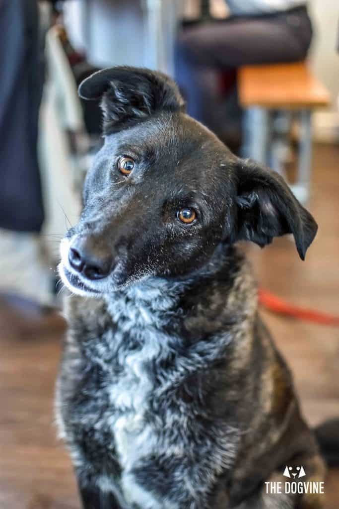 Refuel With Your Pooch At The Dog-Friendly Cafe Paws for Coffee 36