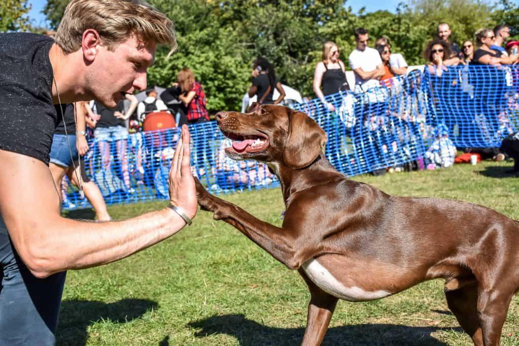 Victoria Park Dog Show 2018