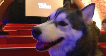 FI - London Gets A New Dog Friendly Cinema At Whirled Brixton