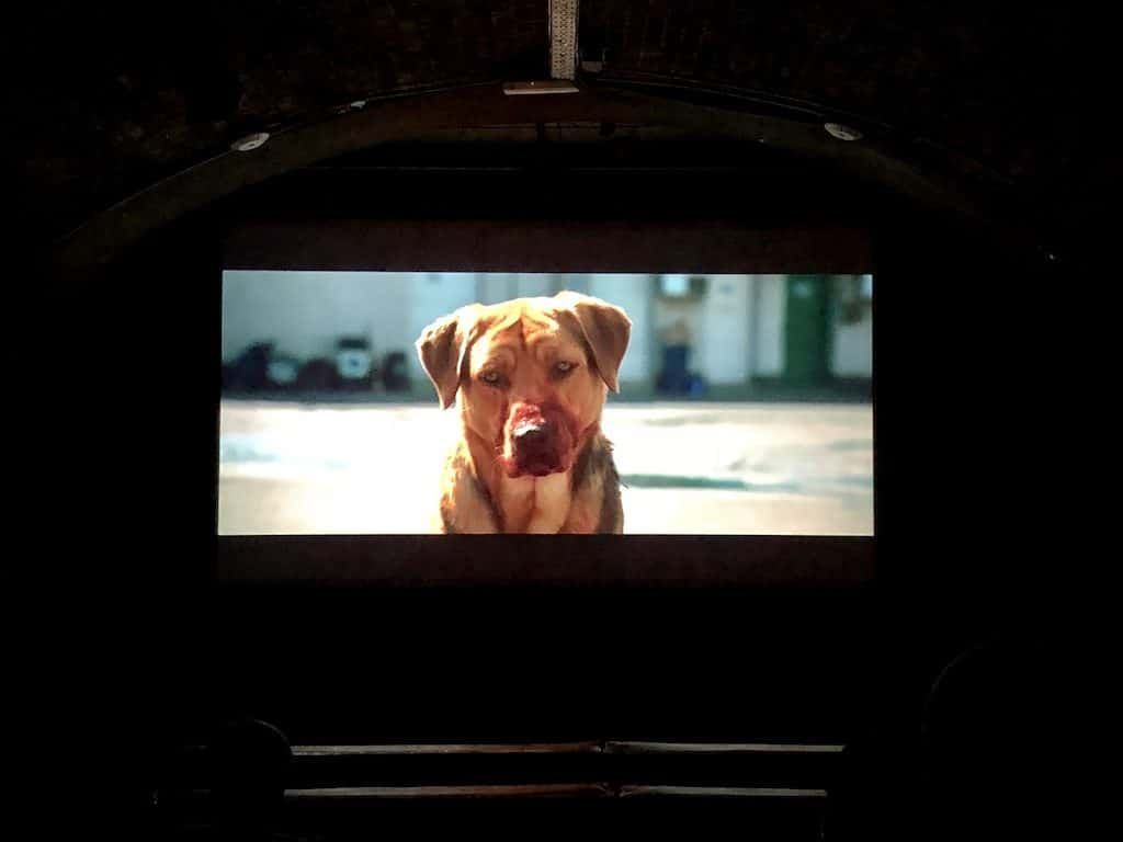 London Gets A New Dog-Friendly Cinema At Whirled Brixton 20