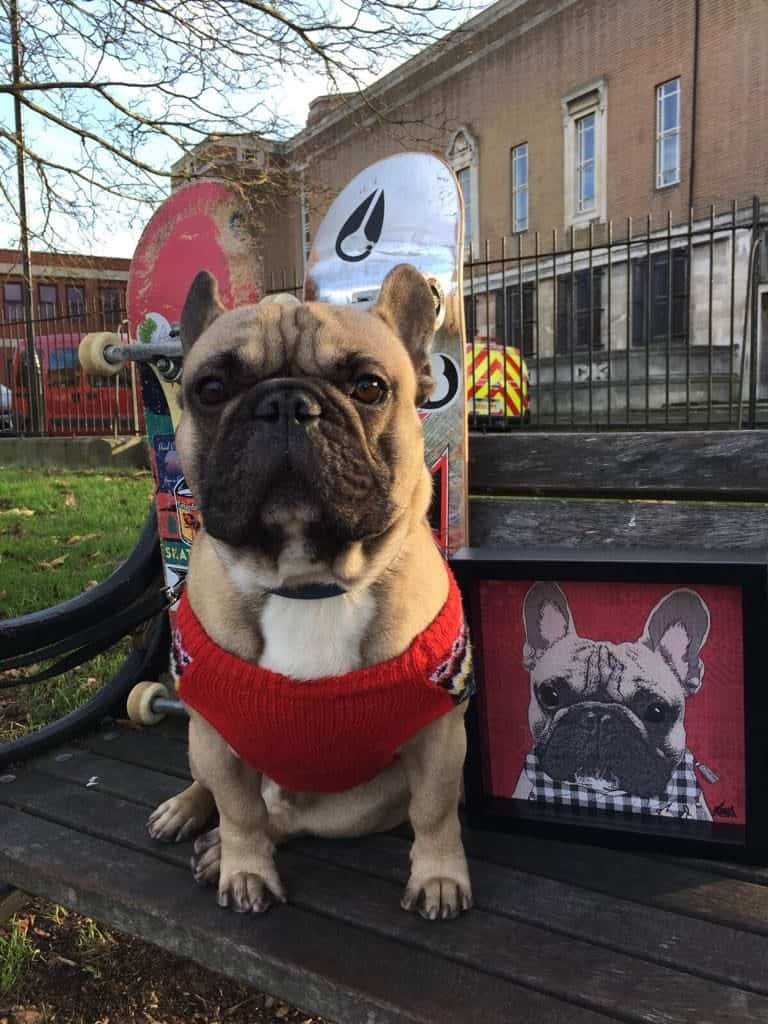 Things To Do With Your Dog In London - London Dog Events - Make Your Pet Famous - Aria - Rose Hill Designs Eroc with artwork