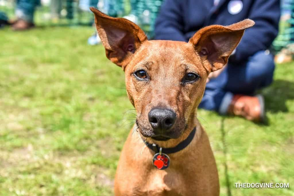 April 2018   What's On For London Dogs This Month End