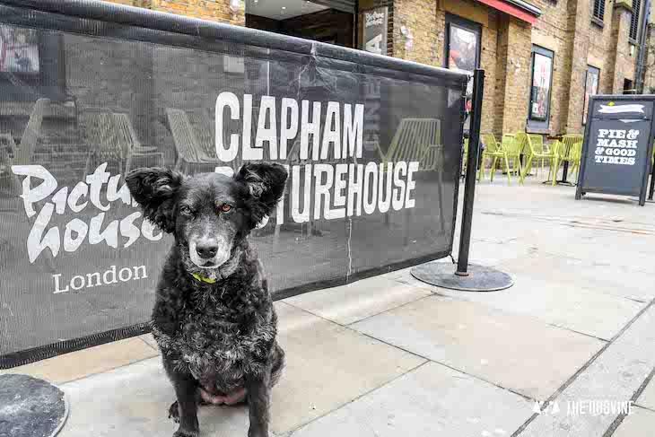 Dog-Friendly Cinema - Picturehouse Clapham - Isle of Dogs 26