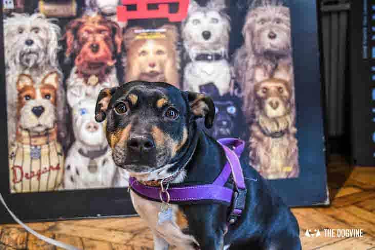 Dog-Friendly Cinema - Picturehouse Clapham - Isle of Dogs 35