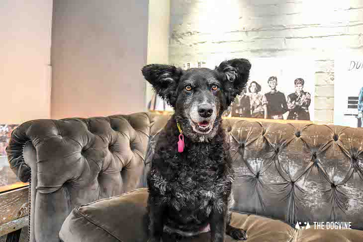 Dog-Friendly Cinema - Picturehouse Clapham - Isle of Dogs 46