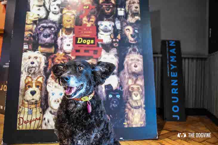 Dog-Friendly Cinema - Picturehouse Clapham - Isle of Dogs 52
