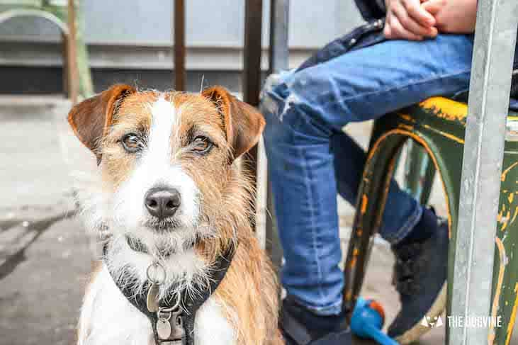 Dog-Friendly Cinema - Picturehouse Clapham - Isle of Dogs 55