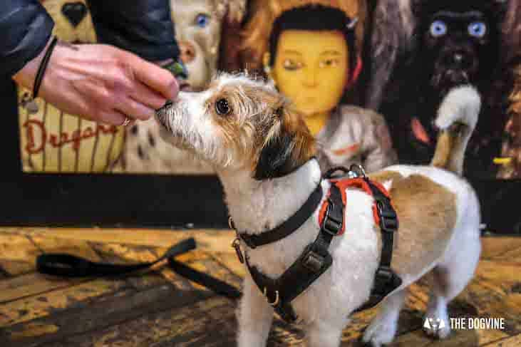 Dog-Friendly Cinema - Picturehouse Clapham - Isle of Dogs 7