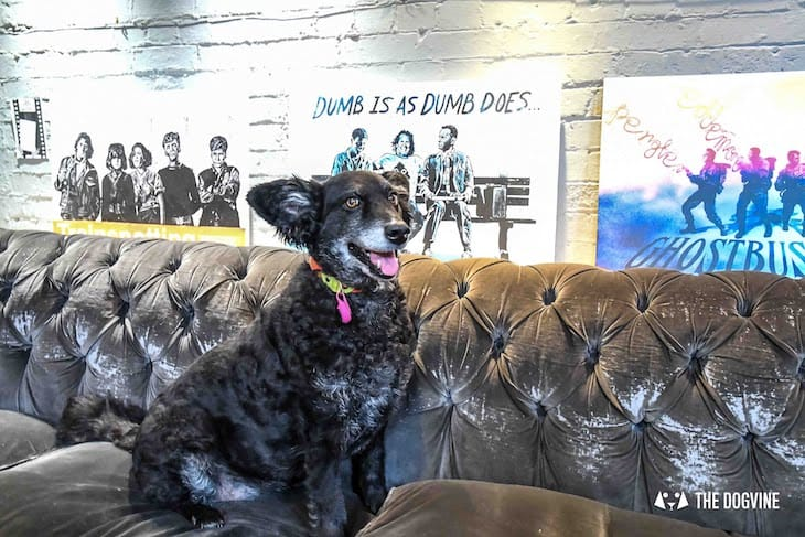 Dog-Friendly Cinema - Picturehouse Clapham - Isle of Dogs - Belinha