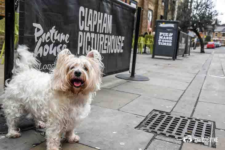 Dog-Friendly Cinema - Picturehouse Clapham - Isle of Dogs - Starlett