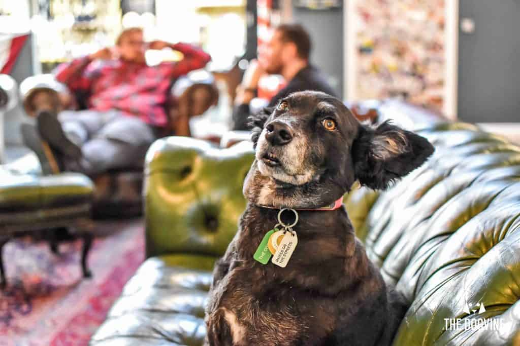 Dog-Friendly Shoreditch Mutts and Motorcycles At The Bike Shed 37