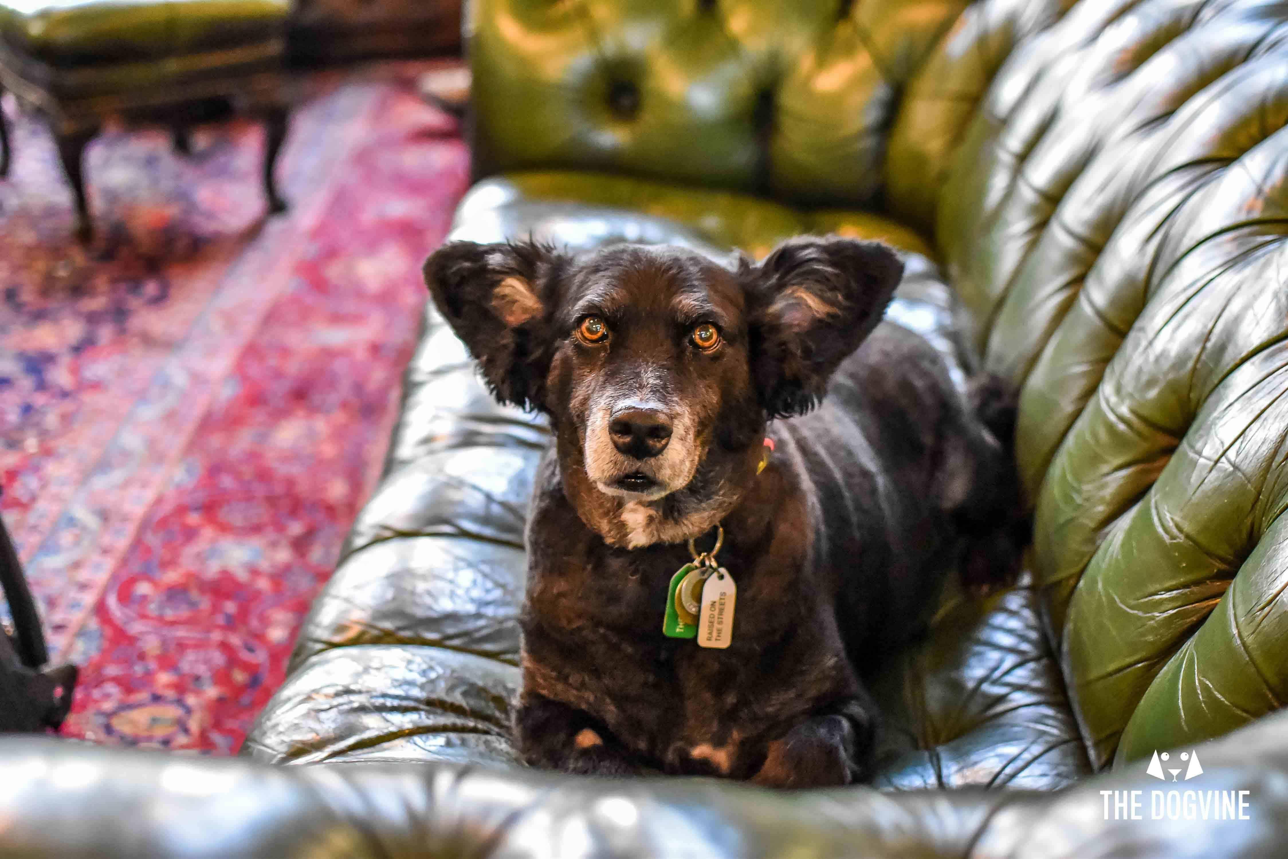 The Dog House Barbers