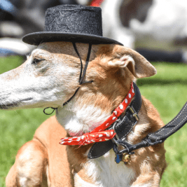FI April 2018 _ What's On For London Dogs This Month