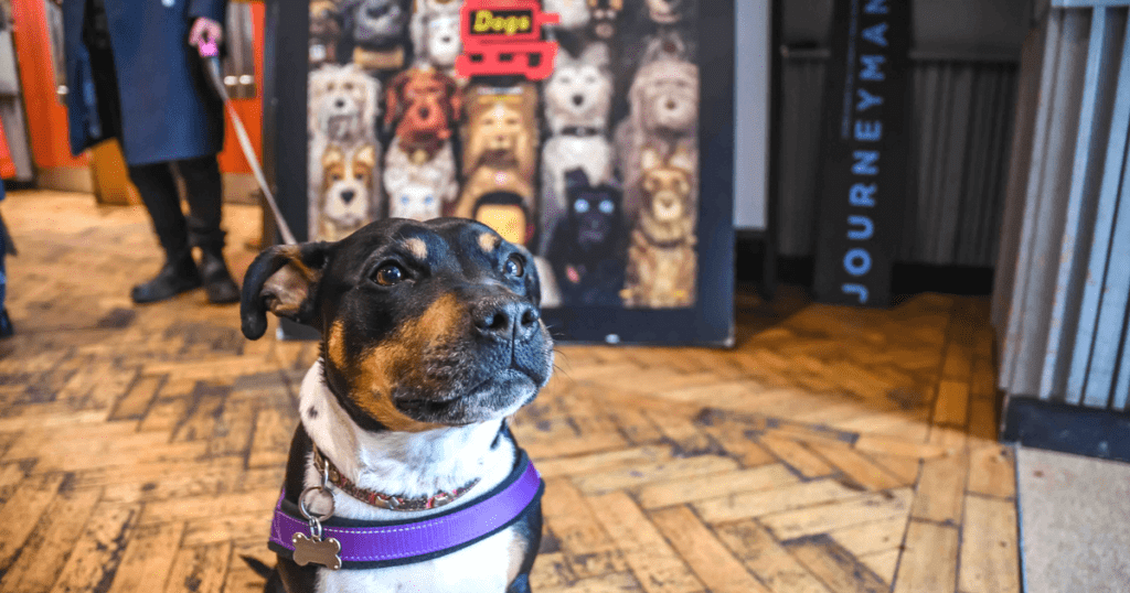Dog-Friendly Cinema At Picturehouse Clapham Is A Barking Success