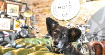 FI - Dog-Friendly Shoreditch Mutts and Motorcycles At The Bike Shed