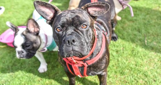 FI - The London Dog Meetups Guide For You And Your Dog - Things To Do With Your Dog