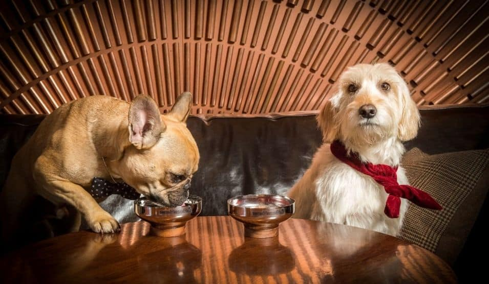 London Dog Events - Smith & Whistle Cocktail Bar For Dogs