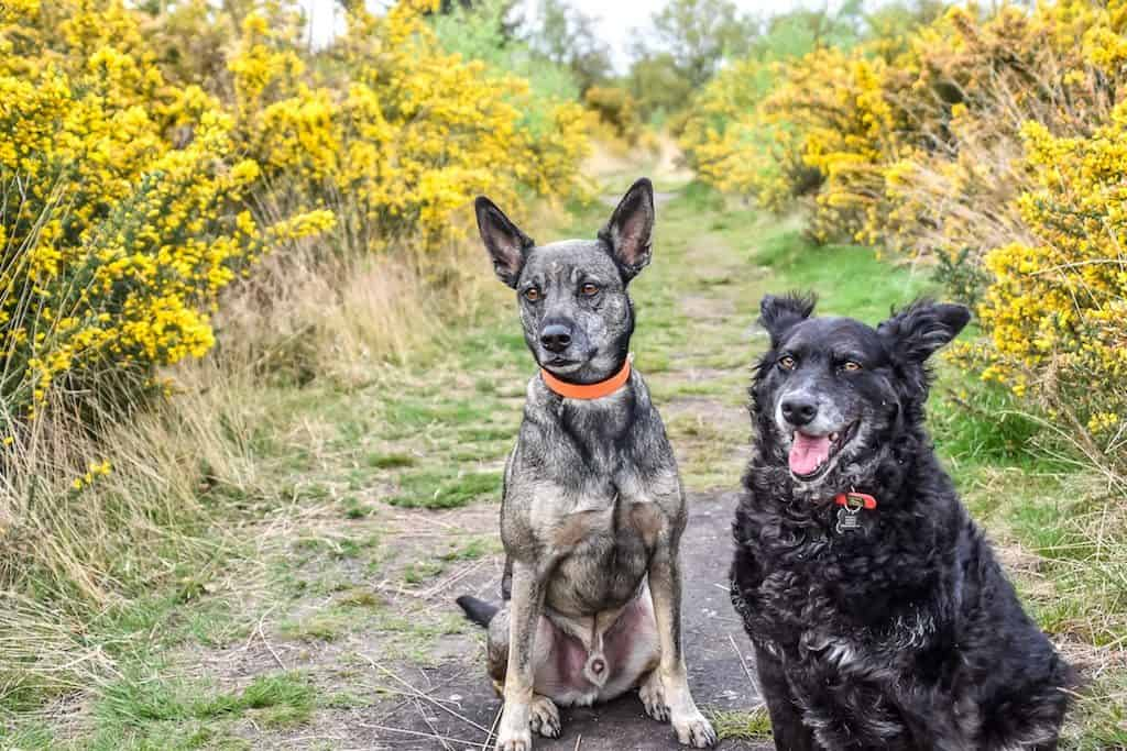 London Dog Events - The Great Wimbledon Dog Walk 2018 - Walking for Paws