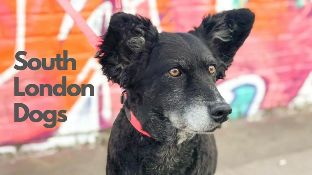 South London Dogs Facebook Group