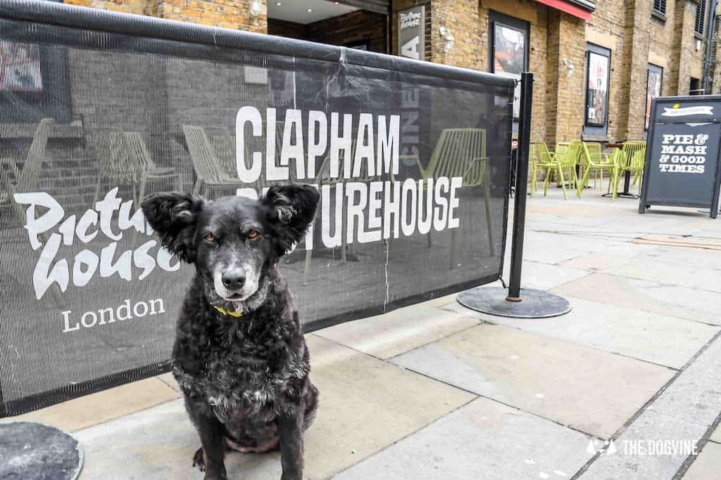 Dog-Friendly Cinema Isle of Dogs At Picturehouse Clapham April
