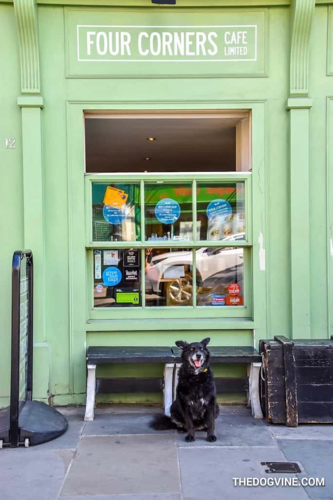 Dog-Friendly Waterloo - Four Corners Cafe