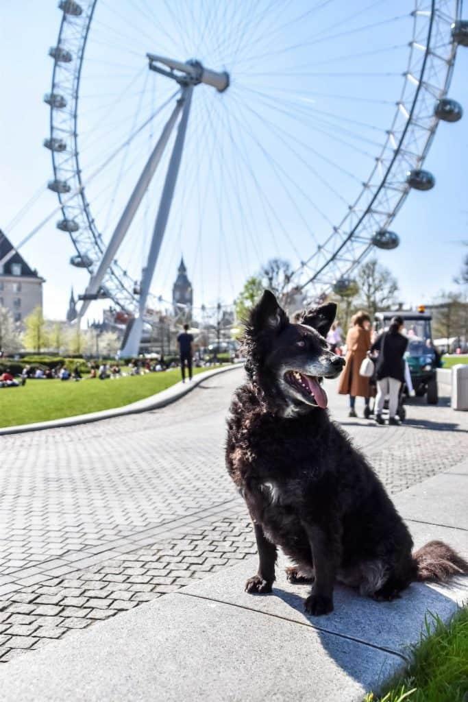 Dog-Friendly Waterloo - London Eye