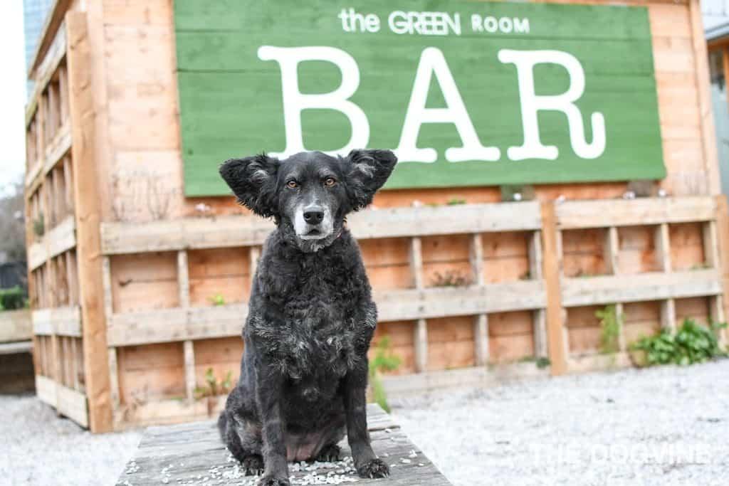 Dog-Friendly Waterloo The Green Room 1