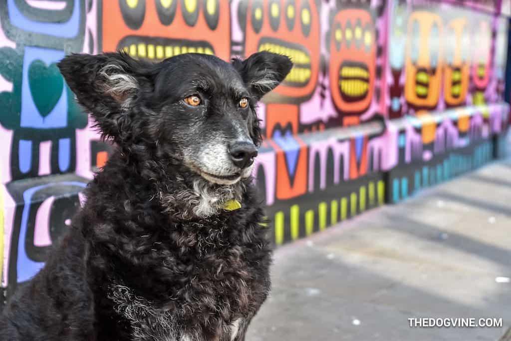 Dog-Friendly Waterloo Vaulty Towers