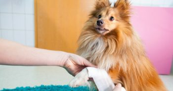 FI - Where To Do A Dog First Aid Course In London