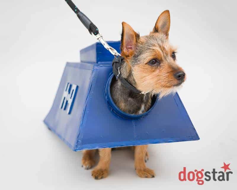 London Dog Events - Sci-Fido Dog Show - London Dog Shows