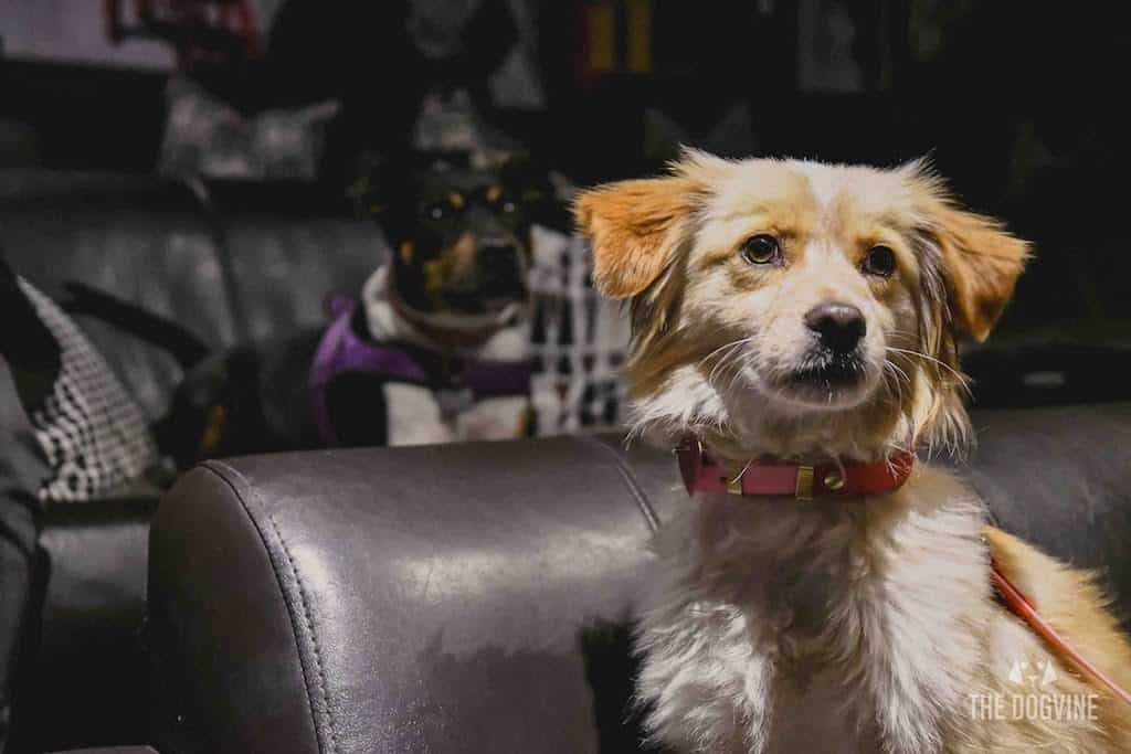 London Dog-Friendly Cinema At The Exhibit Puppy Love Brunch Review 16