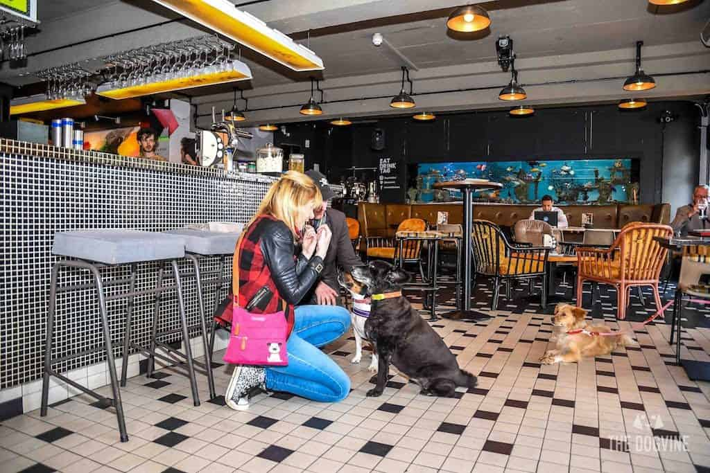 London Dog-Friendly Cinema At The Exhibit Puppy Love Brunch Review 24