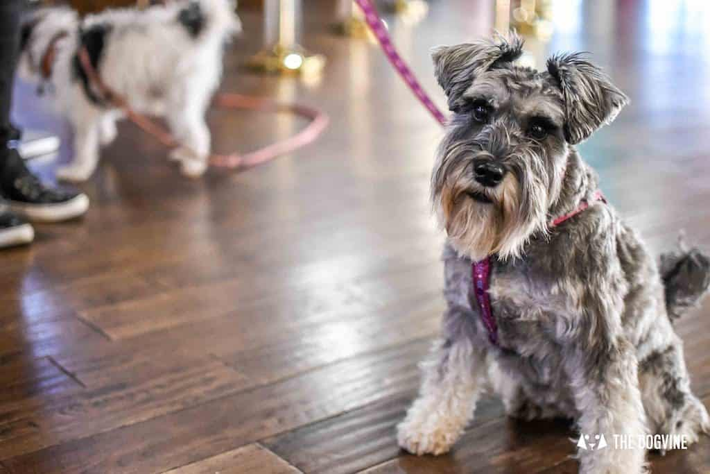 Picturehouse Central Dog-Friendly Cinema Isle of Dogs 22